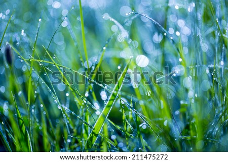 wet grass on summer morning - stock photo