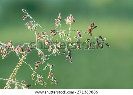 wet grass with dew drops on a summer meadow, a macro - stock photo