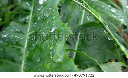 Wet green plants covered with raindrops