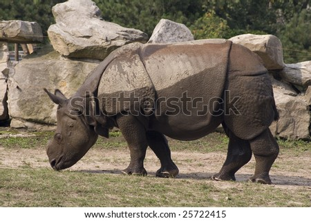 Wet Hippopotamus - stock photo