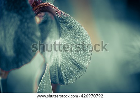 wet iris flower with rain drops on leafs - stock photo