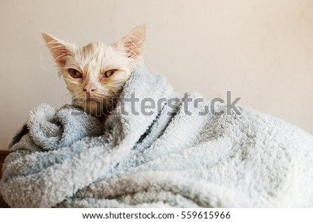 Wet kitty wrapped in a blanket