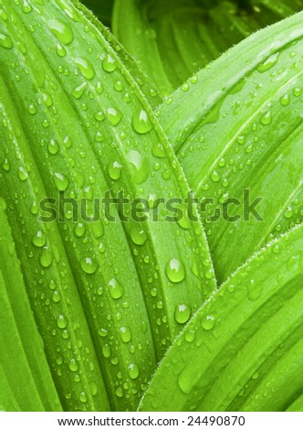 Wet leaf abstract - stock photo