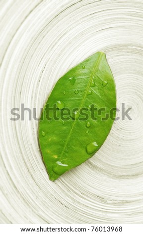 wet leaf macro - zen concept - stock photo