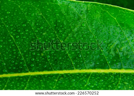 wet leaf of a plant with water drops. Freshness concept - stock photo