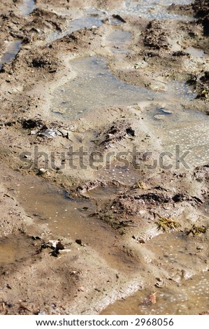 wet mud texture - stock photo