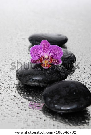 Wet pebble stones with white orchid