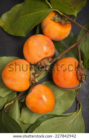 wet persimmon fruit on the branch - stock photo