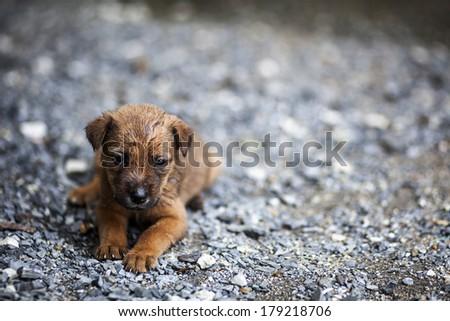 Wet puppy. - stock photo