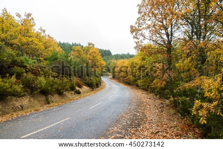Wet road curves rain, among autumnal grove of oaks, heather and pine trees, and fallen leaves on the ground. Traffic signs of snow and curve