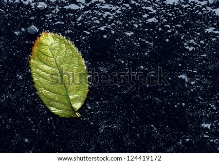Wet single fallen green leaf on black asphalt as a symbol of renewal and hope after winter or before spring season with reflections as an icon of urban environment life with blank are for text. - stock photo
