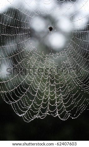 Wet Spider web - stock photo