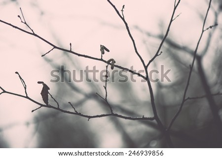 wet tree branches in winter forest with water drops and blurred background - vintage retro effect