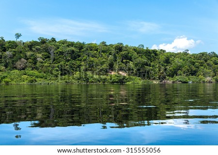Wetland in Amazon, Brazil - stock photo