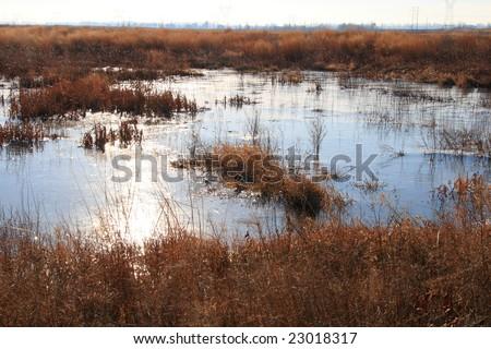 wetland landscape - stock photo