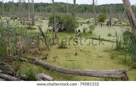 wetland of the Great Marsh, Indiana Dunes National Lakeshore - stock photo