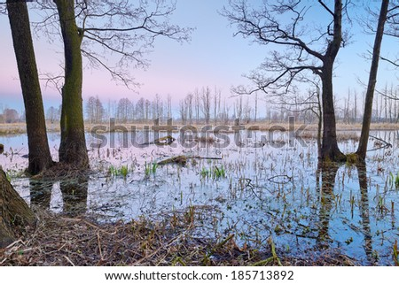 Wetland scenic. Mysterious landscape with flood waters of The Narew River. Beautiful dawn over natural preserve. - stock photo