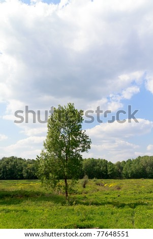 wetlands,grass meadow with trees - stock photo