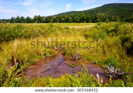 Wetlands, High Allegheny - stock photo