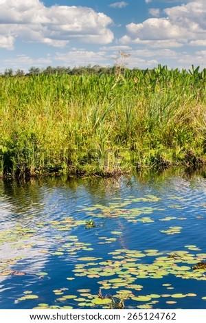 Wetlands in Nature Reserve Esteros del Ibera, Argentina - stock photo