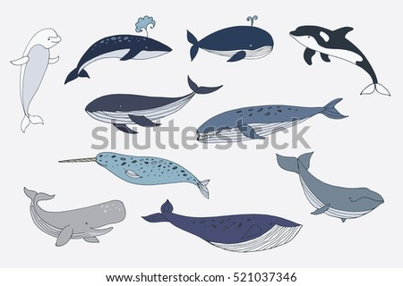 whale color collection