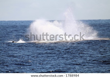 whale jumping in the water