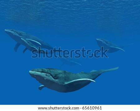 Whale school - stock photo
