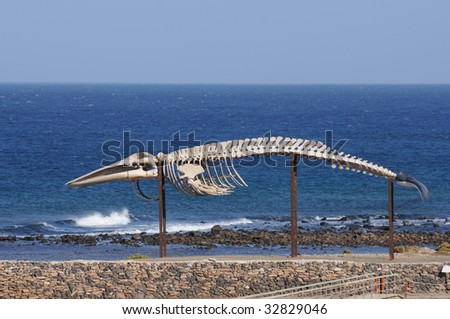 Whale skeleton in Caleta de Fuste, Fuerteventura Spain - stock photo
