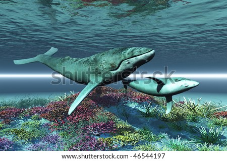 WHALE SONG - Humpback whale mother and calf swim over a colorful coral reef. - stock photo