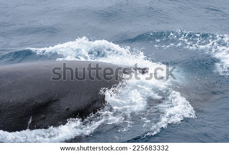 Whale swims in the ocean - stock photo