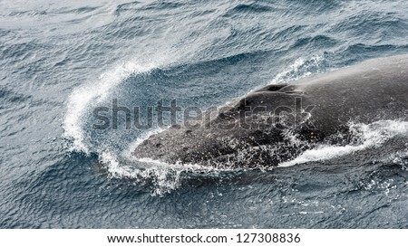 Whale swims over the South Atlantic Ocean - stock photo