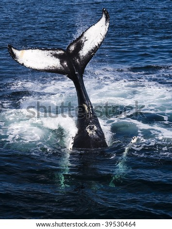 Whale tail. - stock photo
