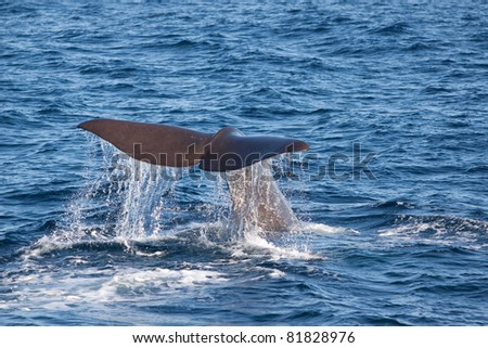 whale tail slapping the waters of Norway (july 2011) - stock photo
