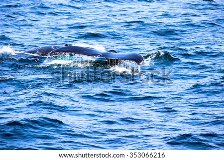 Whale tail with water drops in the blue ocean - stock photo