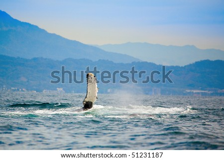 Whale watching - stock photo