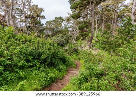 Whaler's Knoll Trail at Point Lobos State Natural Reserve is ideal for hiking, walking running, along the rugged Big Sur coastline, near Carmel and Monterey, CA. on the California Central Coast - stock photo