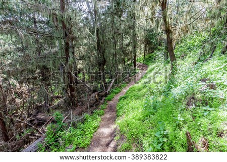 Whaler's Knoll Trail at Point Lobos State Natural Reserve is ideal for hiking, walking running, along the rugged Big Sur coastline, near Carmel and Monterey, CA. on the California Central Coast. - stock photo