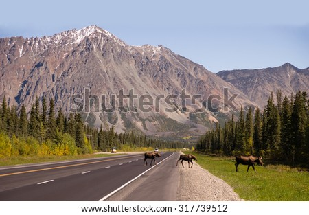 What can be a dangerous crossing occurs safely oin this day for local wildlife - stock photo