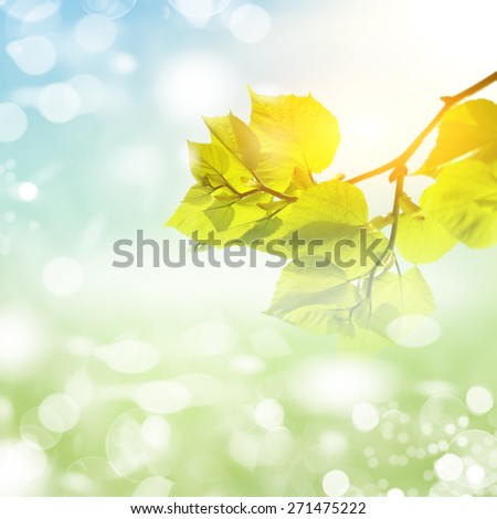 Whats a funny nice day! Abstract natural backgrounds - stock photo