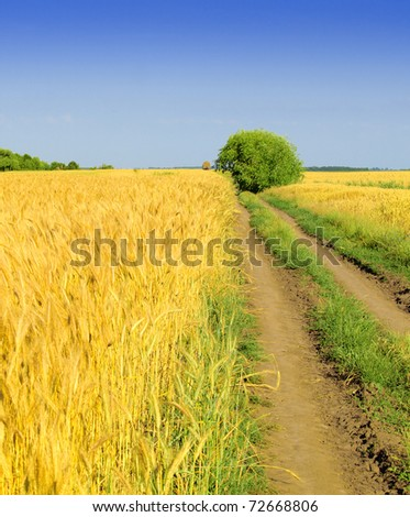 wheat and dirt road - stock photo