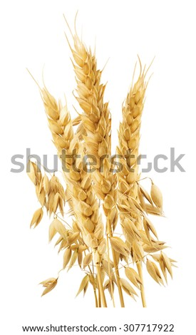 Wheat and oats ears vertical isolated on white background as package design element