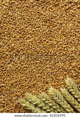 Wheat background with whole wheat and grain