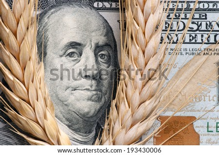 Wheat cone on one hundred dollars - stock photo