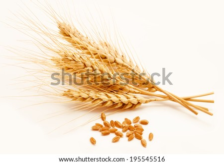 Wheat ears and seed isolated on a white background  - stock photo