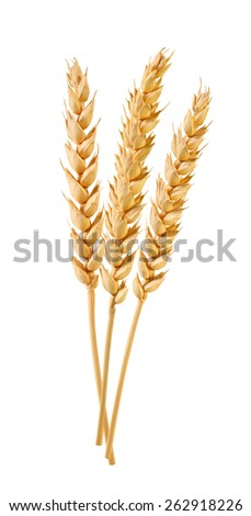 wheat ears isolated - stock photo