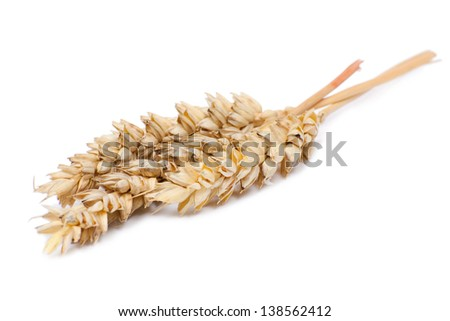 Wheat ears isolated on white background - stock photo