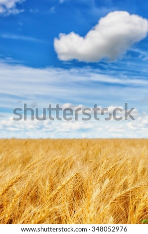 Wheat ears on a background of cloudy sky (shallow dof) - stock photo