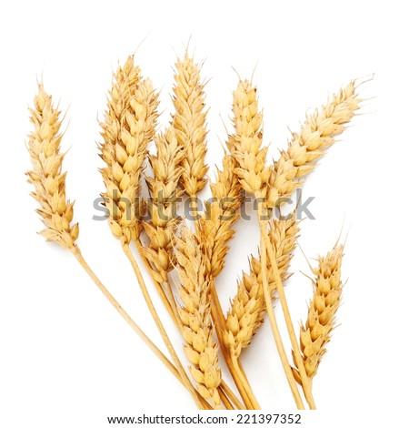 Wheat ears on white background - stock photo