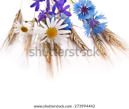 Wheat ears with flowers isolated on white background - stock photo