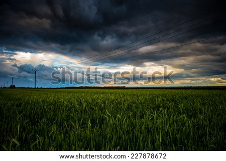 Wheat field at sunset after a storm